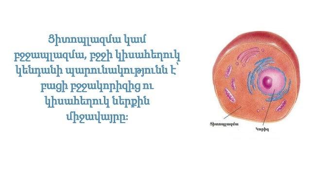 Image result for Ցիտոպլազմա